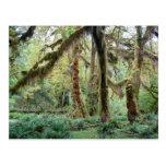 Selva tropical de Hoh Postal