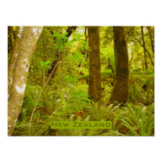 Selva tropical de Nueva Zelanda Póster