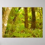 Selva tropical de Nueva Zelanda Posters