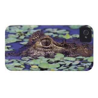 Selva tropical de Suramérica, el Brasil, el Amazon Case-Mate iPhone 4 Cárcasas