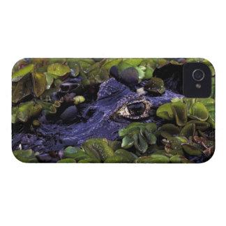 Selva tropical de Suramérica, el Brasil, el Amazon Case-Mate iPhone 4 Cárcasa