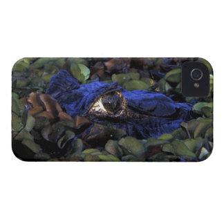Selva tropical de Suramérica, el Brasil, el Amazon iPhone 4 Case-Mate Coberturas
