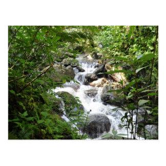 Selva tropical de Yunque, Puerto Rico Tarjeta Postal