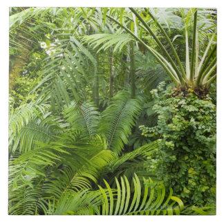 Selva tropical del Amazonas, Amazonia, el Brasil 2 Azulejo Ceramica