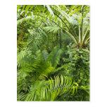 Selva tropical del Amazonas, Amazonia, el Brasil 2 Postales