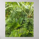 Selva tropical del Amazonas, Amazonia, el Brasil 2 Póster