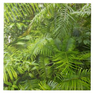 Selva tropical del Amazonas, Amazonia, el Brasil Teja Cerámica