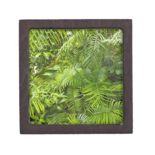 Selva tropical del Amazonas, Amazonia, el Brasil Caja De Joyas De Calidad