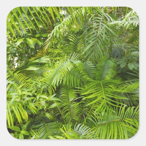 Selva tropical del Amazonas, Amazonia, el Brasil Pegatina Cuadrada