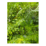 Selva tropical del Amazonas, Amazonia, el Brasil Postales