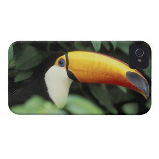 Selva tropical del Amazonas Case-Mate iPhone 4 Cárcasa