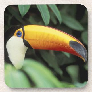 Selva tropical del Amazonas Posavasos De Bebidas