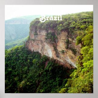 Selva tropical del Brasil Póster