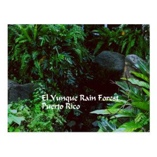 Selva tropical del EL Yunque Tarjetas Postales