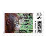 Selva tropical del orangután
