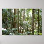 Selva tropical en Australia Posters
