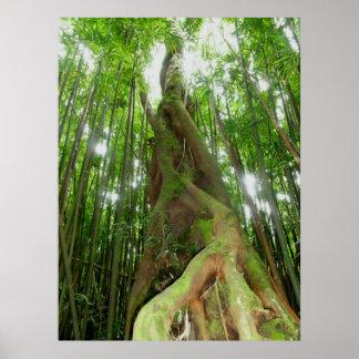 Selva tropical hawaiana posters