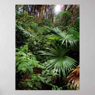 Selva tropical hawaiana póster