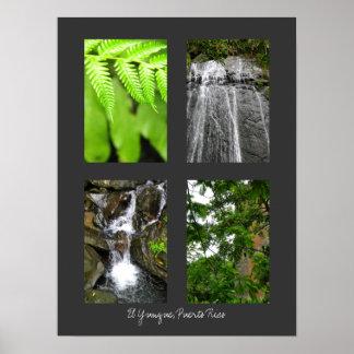 Selva tropical nacional del EL Yunque, Puerto Rico Posters