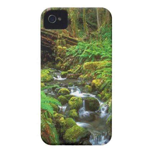 Selva tropical NP olímpico iPhone 4 Coberturas