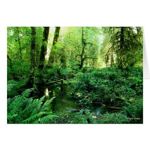 Selva tropical olímpica - costa de Washington Tarjeta De Felicitación