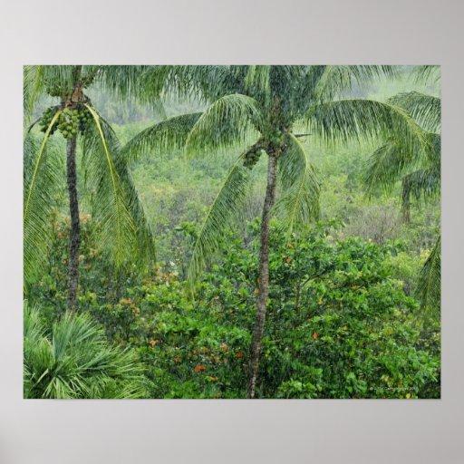 Selva tropical tropical 2 póster