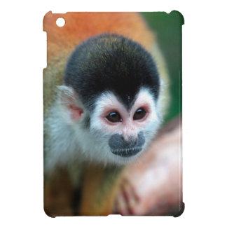 Selva tropical tropical linda de Panamá del mono d