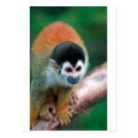 Selva tropical tropical linda de Panamá del mono Postal