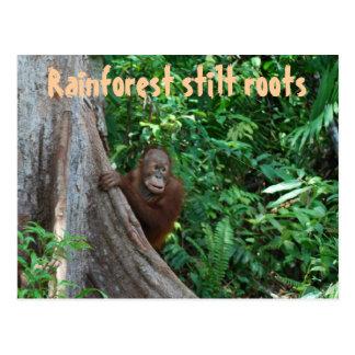Selva tropical y fauna ecuatoriales tarjeta postal