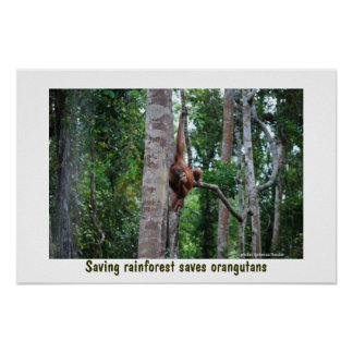 Selva tropical y orangután póster
