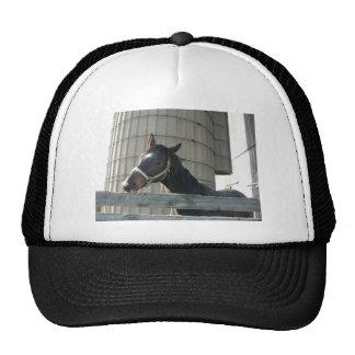 Semental/caballo negros gorros bordados