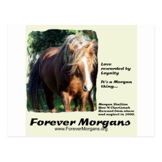 Semental de ForeverMorgans Morgan Postales