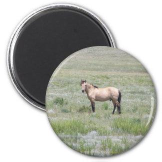 Semental del caballo imán redondo 5 cm
