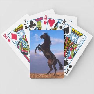 Semental negro barajas de cartas