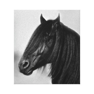 Semental negro frisio orgulloso impresión en lienzo