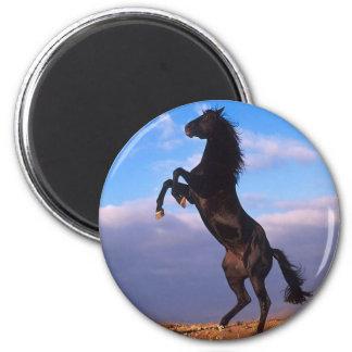 Semental negro imán redondo 5 cm