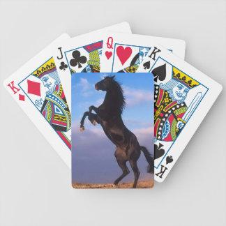 Semental negro salvaje que alza el caballo baraja