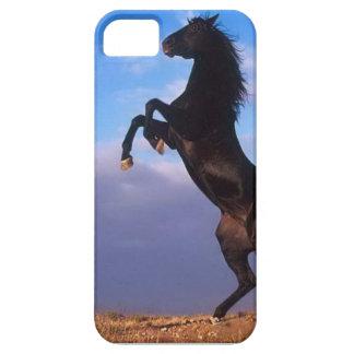 Semental negro salvaje que alza el caballo iPhone 5 carcasas