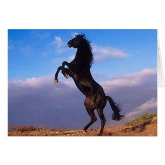 Semental negro salvaje que alza el caballo felicitación