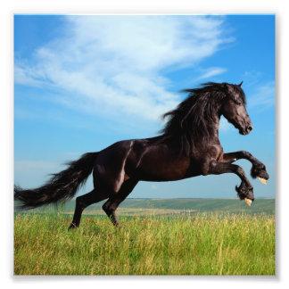 semental negro y salvaje que alza el caballo cojinete