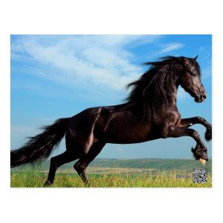 semental negro y salvaje que alza el caballo postales