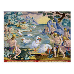 Semi-Naked Savages of India Using Pelicans to Catc Postcard
