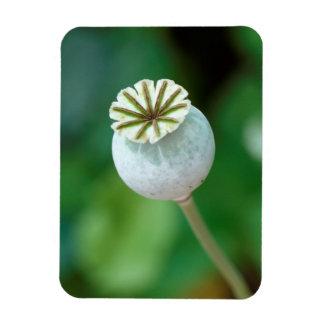 Semilla de la cabeza de flor de la amapola, imanes flexibles