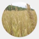 Semilla del trigo pegatina