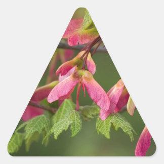 Semillas coas alas rosa del sicómoro - pegatina triangular