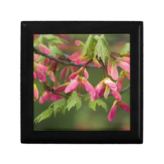 Semillas coas alas rosa del sicómoro - pseudoplata cajas de joyas
