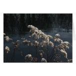 semillas congeladas tarjetón