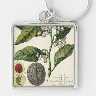 Semillas de la fruta de la planta de la nuez llavero cuadrado plateado