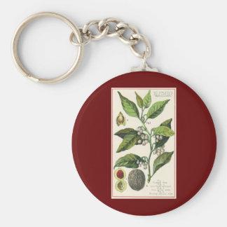 Semillas de la fruta de la planta de la nuez llavero redondo tipo pin