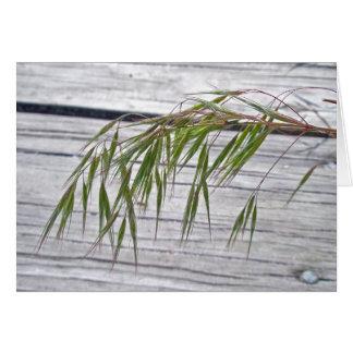 Semillas de la hierba de la playa en la tarjeta de
